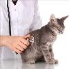 Ветеринарные клиники в Залегощи